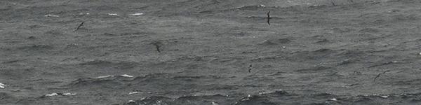 01(CIMG1238・20170917)トリミング縮小150×600(3)・露光量ガンマ0.75・コントラスト+100・自然な彩度-50・露光量ガンマ0.67